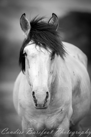 Return to Freedom, American Wild Horse Sanctuary (Lompoc, CA).