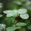 Rain Washed