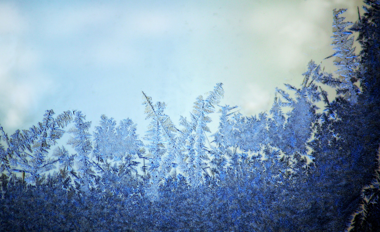 Forest Of Frost