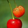 Cherry Stones