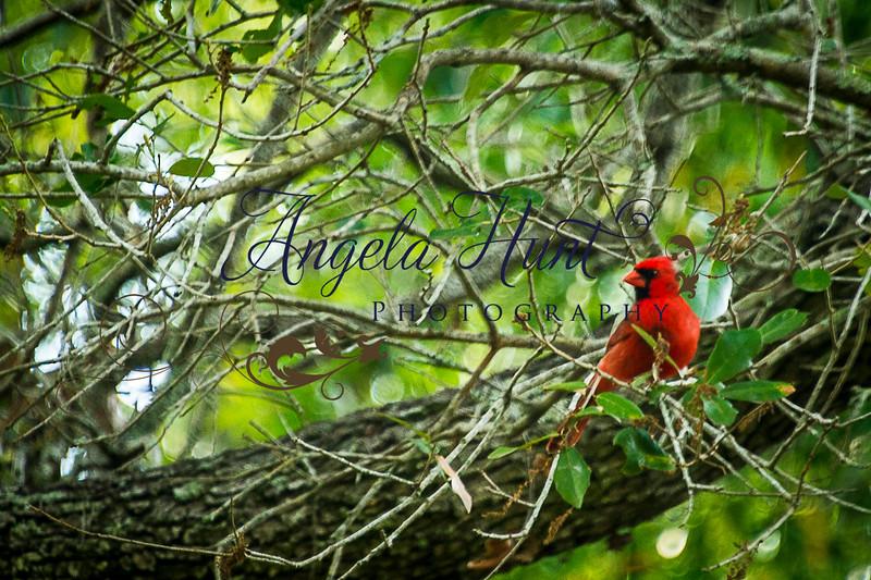 Cardinals-7715