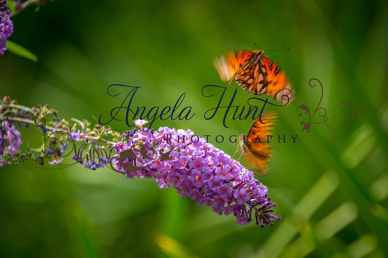 Butterfly ballet.