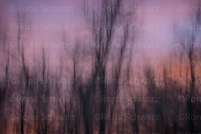 Artistic abstract of trees at sunset above the Upper Mississippi, Le Claire Iowa.