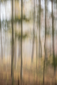 USA, Tennessee., Cades Cove, In-camera blur of colorful trees on a foggy morning ,  Great Smoky Mountains National Park.