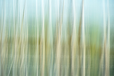 Abstract, in-camera blur of trees and reflections in water, Celery Bog wetlands, West Lafayette, Indiana.
