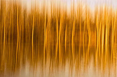 Abstract, in-camera blur of trees and reflections in water.