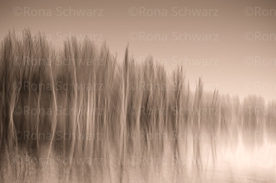 Abstract, in-camera blurs of trees and reflections in water.