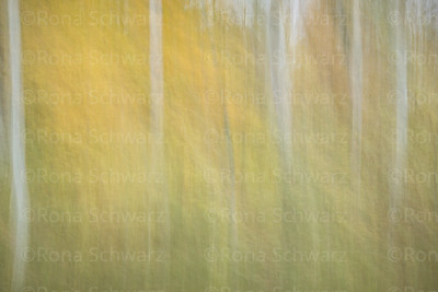 Abstract, in-camera blur of trees in autumn.