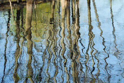 Tree reflections at the Celery Bog wetlands, West Lafayette, IN.