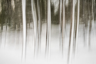 USA, Maine, Acadia National Park.  Abstract, multiple exposure blur of trees in winter.