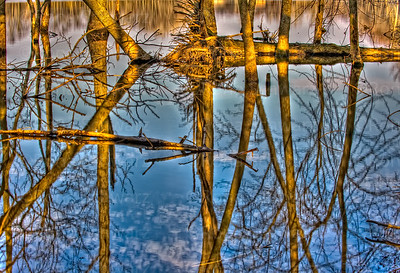 Tree reflections at Hadley Lake, West Lafayette, IN.