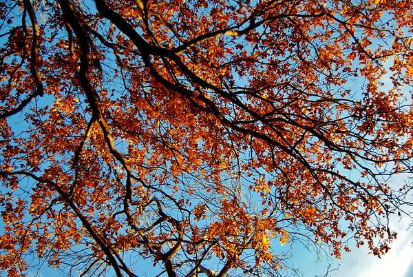beneath the leaves of orange