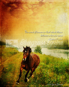 Morning Run. The wind of heaven is that which blows between a horse's ears. ~Arabian Proverb
