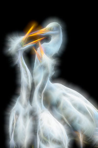 Artistic interpretation of Great Egret feeding chicks. Alligator Farm Zoological Park, St. Augustine, Florida