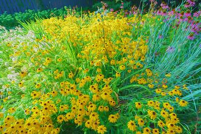 USA, Indiana.  An impressionistic wildflower garden.
