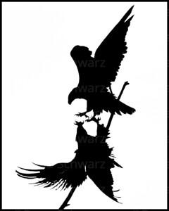 Silhouette of Juvenile Bald Eagle pair displaying aerial courtship behavior.