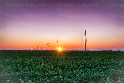 USA, Indiana. Soybean field and wind farm at sundown.