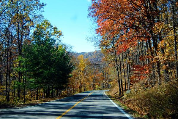 a drive through the autumn trees