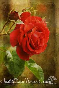 A Rose is Just a Rose...