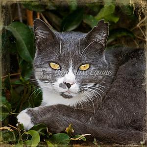 Barn Cat Milpitas, CA