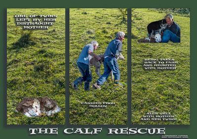 Calf Rescue 4.jpg