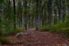 """""""Bokemoa"""" Beech Tree Forrest, Stokke Norway"""