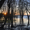 193 - Trees in Swamp, Lake Champlain, VT