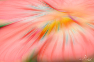 Flower Creative Edit