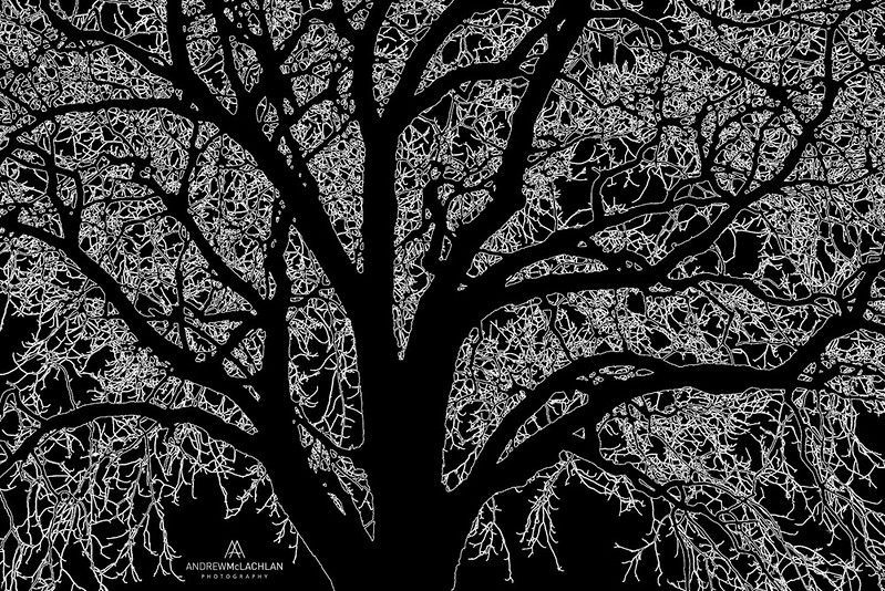 Creative Rendering of WInter Tree