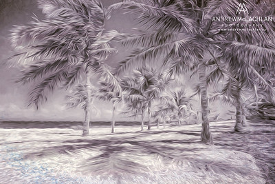 Palm Trees on Cayman Brac - Creative Edit
