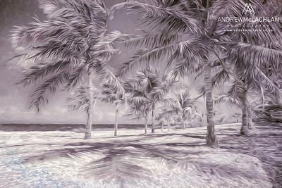 Palm Trees on Cayman Brac - Creative Edit