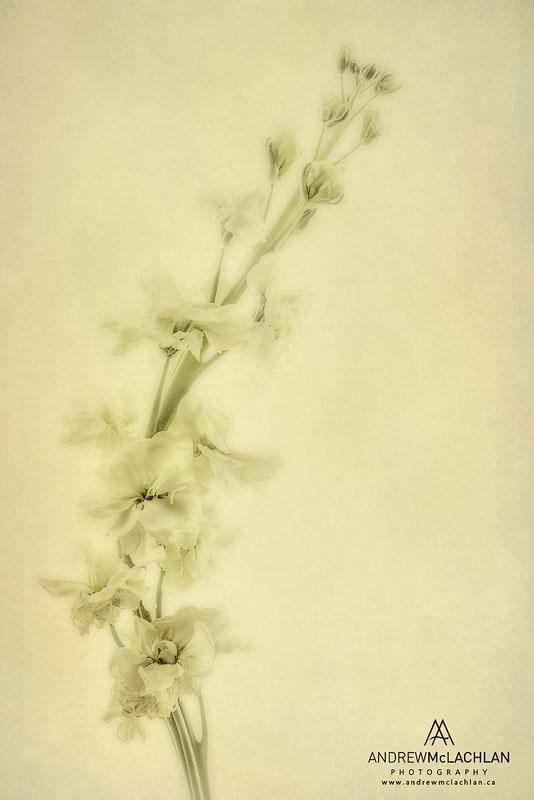 Stock Blossoms - Creative Edit