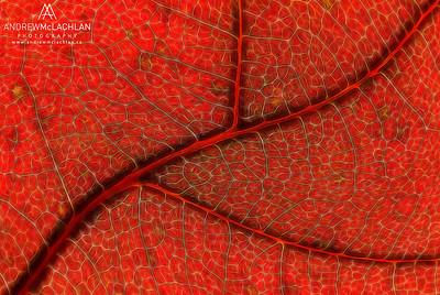 Red Oak Leaf - Creative Edit
