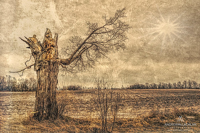 Dead Tree Creative edit