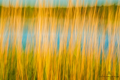 In-camera vertical pan blur at Tiny Marsh Provincial Wildlife Area, Elmvale, Ontario, Canada
