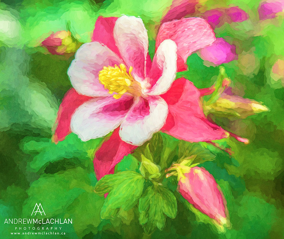 Artistic rendering of Columbine Blossom