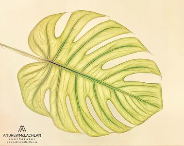 Monsterra Leaf Creative Edit