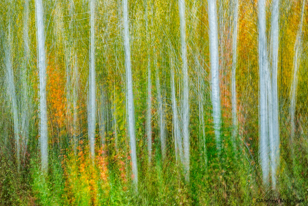 In-camera Multiple Exposure of Autumn Forest
