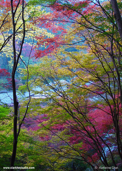 Kyoto Fall II