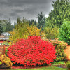 Burning bush 1