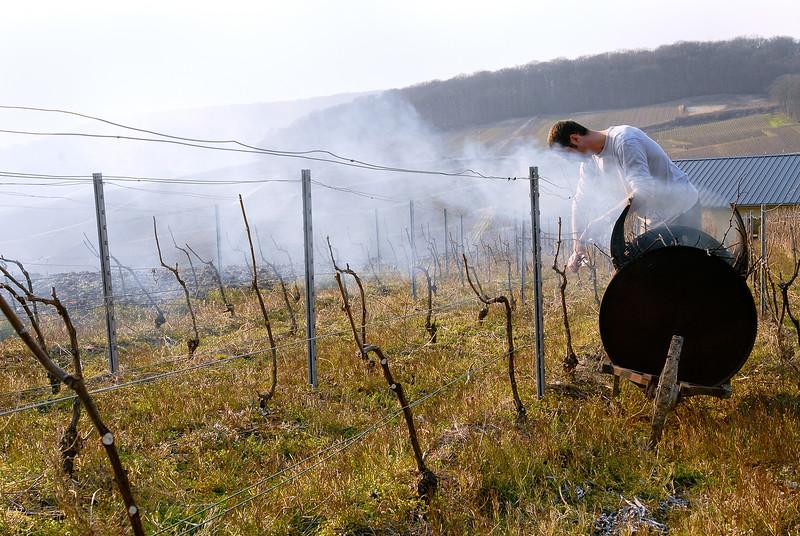 Vigneron en Champagne