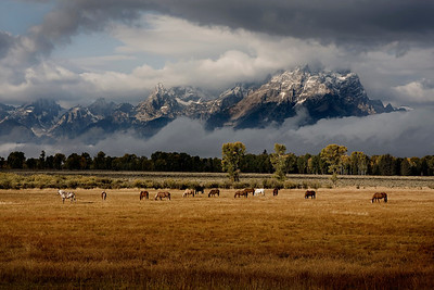 Horses and Tetons 4493