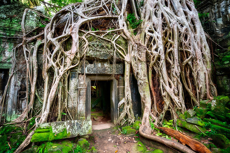 Nature vs Civilization | Siem Reap, Cambodia