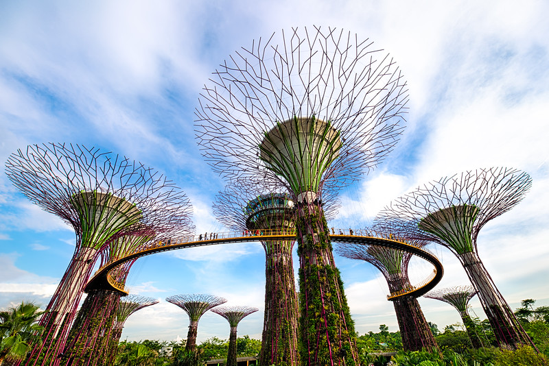 Supertrees  |  Singapore