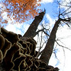 """Happy Fungi"" by Ethan  