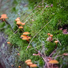 """Mushrooms and Moss"" by Sebastion, 12  