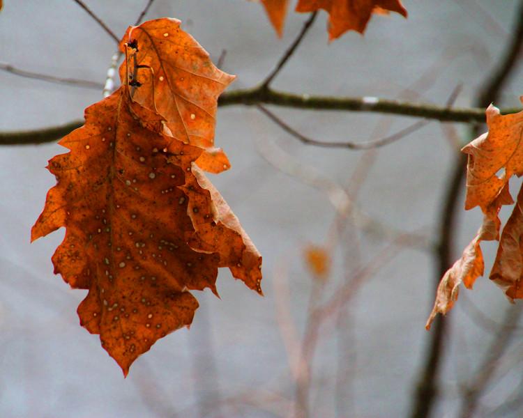"""Orange Leaf"" by Cordell | February 2019"
