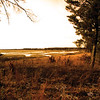 """Crex"" by Cody, 15  