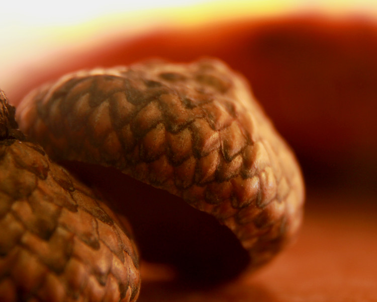 """Acorns"" by Jayden, 16  