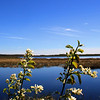 """Natural Service"" by Jayden, 16  